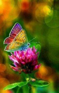 butterflyflowerawewsome15